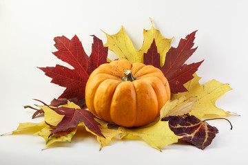 Pumpkin with red and yellow maple leaves on white background.