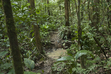 Muddy Rainforest Trail, Amaz