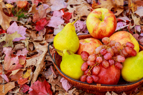 Autumn harvest. Pears, apple, grapes and yellow leaves on the wooden ...