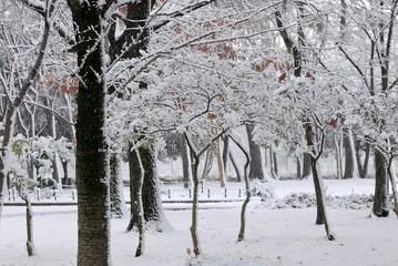 紅葉に積もる雪.