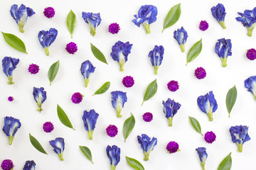 blue pea and globe Amaranth flowers and green leaves on white background.flay lay. overhead view.