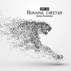 Particle cheetah,particle divergent composition.