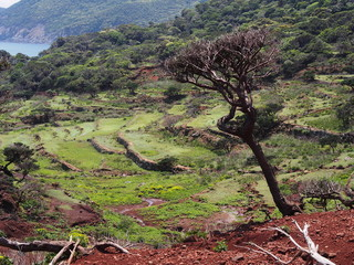 野崎島 段々畑の遺構