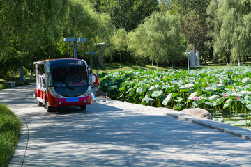 Tour bus following along lotus pond.