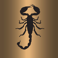 Scorpion flat art illustration