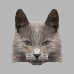 Cat low poly design. Triangle vector illustration.