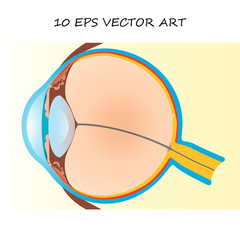 vector eye structure scheme