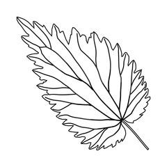 black and white nettle leaf 2