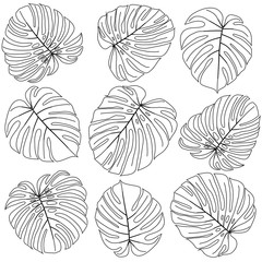 black and white leaves monstera 2