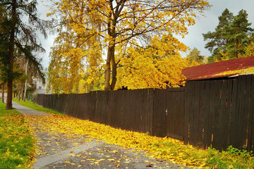 Yellow colored tree behind the fence and fallen leaves on the way to the train station in the village of Doksy in Macha's land in Czech Republic