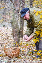 Mature caucasian man picking mushrooms in the forest