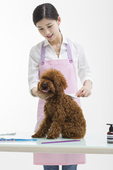 Groomer with a cute poodle