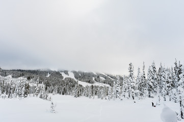 Snowshoe trails at Paradise Meadows at Mount Washington British Columbia in winter showing snow on trees and downhill alpine slopes runs in background and adult snowshoeing pulling child on sled