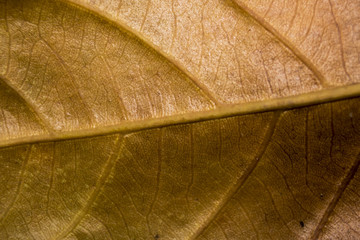 Close up of colorful autumnal leaf