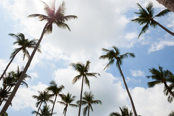 Palm trees against blue sky.