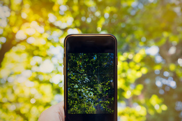 Close up of smartphone monitor talking a picture of trees and sun at daytime