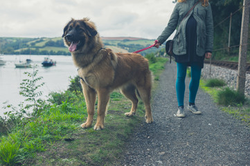 Woman walking giant dog by river