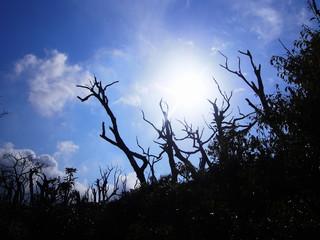 火山ガスで枯れた木と太陽
