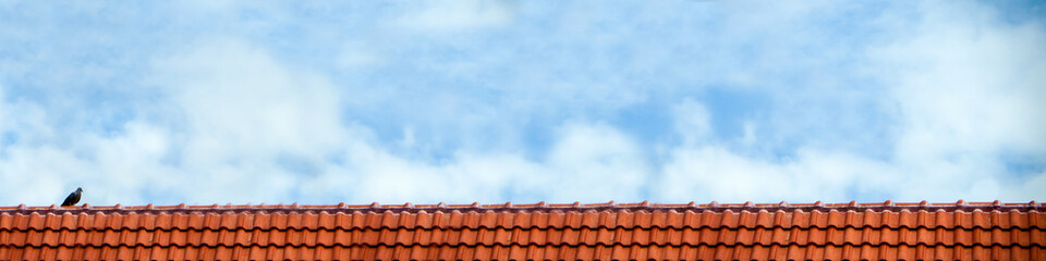 pigeon stand on roof and blue sky white cloud