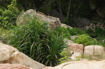 aloe growing on a rocky seashore