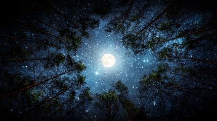 Wall Murals Night Beautiful night sky, the Milky Way, moon and the trees. Elements of this image furnished by NASA.