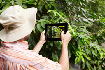 Protection and conservation of natural resources. Rear shot of scientist in panama hat and shirt holding touch pad and taking picture of green leaves of plant while exploring wildlife in rainforest
