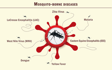 Mosquito carrying deseases infographics