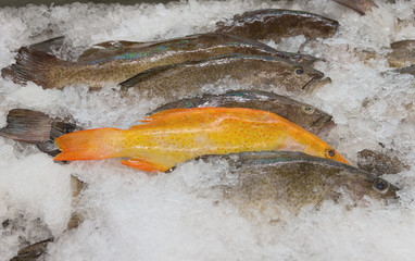 Fish Market in California