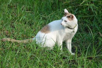 Cat in park. Cat sitting on the grass