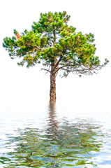 Pine tree over water background