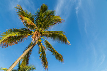 Palm tree/ A palm tree against beautiful blue sky.