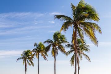 five palm trees/palm trees against beautiful blue sky.