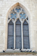 mullioned window and pigeons,  church of Santa Chiara, Naples, Italy
