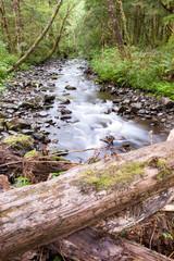 Summer Forest Stream 3