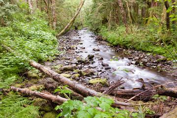 Summer Forest Stream 1