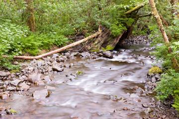 Summer Forest Stream 6