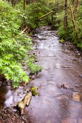 Summer Forest Stream 7