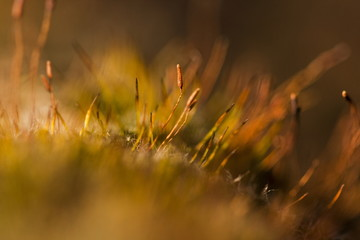 Abstract, colorful composition with blurred moss flowers in spring