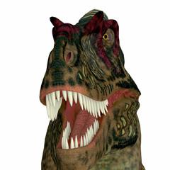 Albertosaurus Dinosaur Head - Albertosaurus was a theropod carnivorous dinosaur that lived in the Cretaceous Period of North America.
