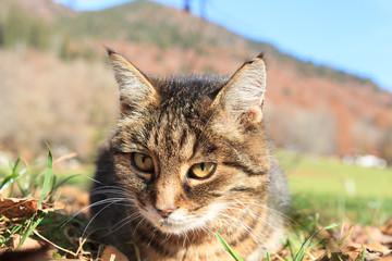 Portrait of a cat in teh meadow