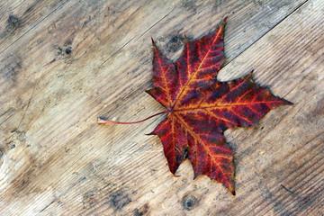 Das rote Herbstblatt auf Holzuntergrund