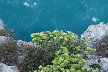 erba selvaggia sulla sommità di una scogliera a picco sul mare