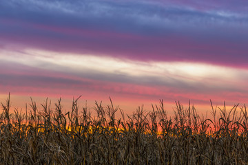 Cornfield Sky - Setting Sun Over Central Indiana