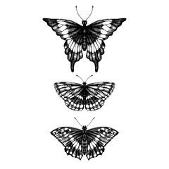 hand drawn set of butterflies