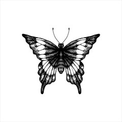 machaon, hand drawn butterfly