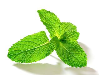 Fresh mint isolated