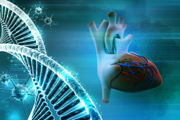 Human heart and dna