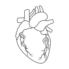 Heart icon in outline style isolated on white background. Organs symbol stock vector illustration.