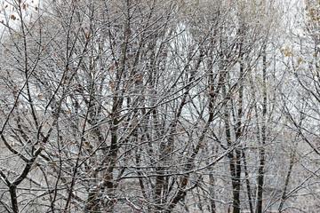 snow trees yard house evening