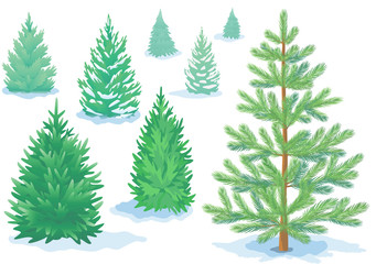 A set of pine trees, fir trees with varying degrees of detail.